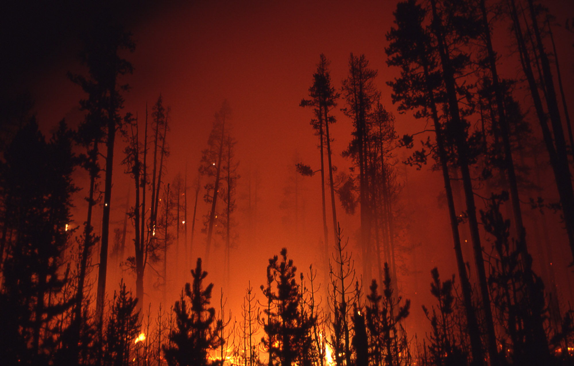 1988 Wildfire_NPS Photo