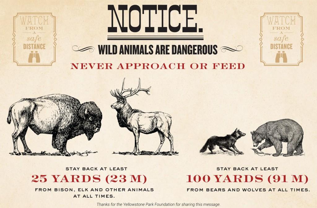Animal-Safety