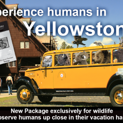 "Announcing our Newest Package: ""Wild About Humans"""
