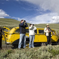 Spring Vacation Packages at Yellowstone