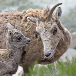 5 Reasons to Visit Yellowstone National Park This Spring
