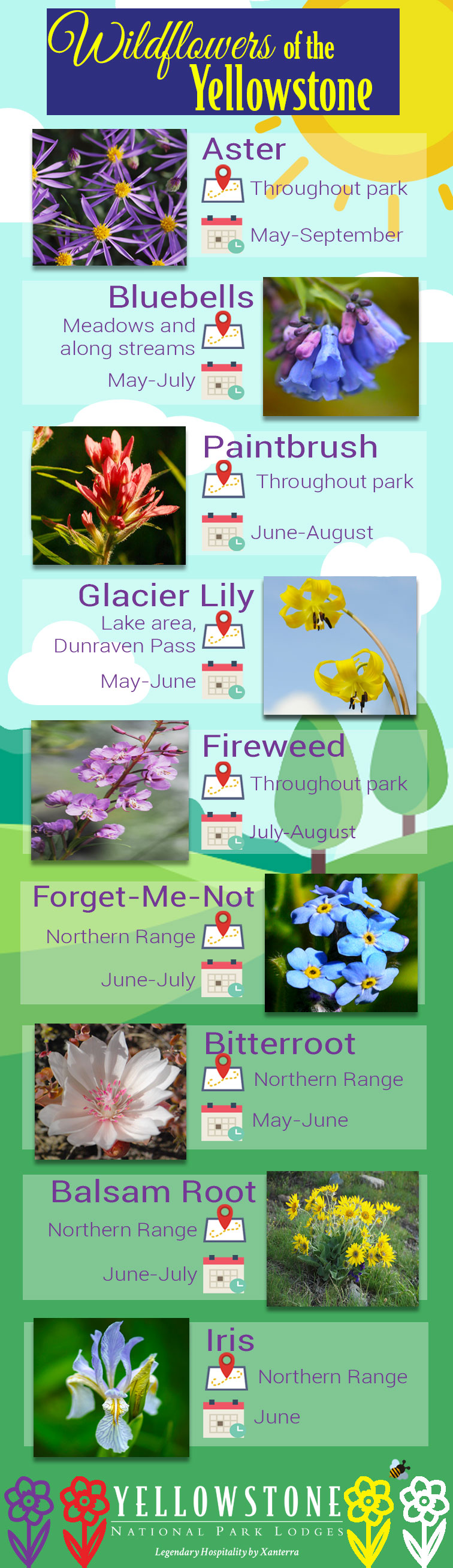 Wildflower Infographic