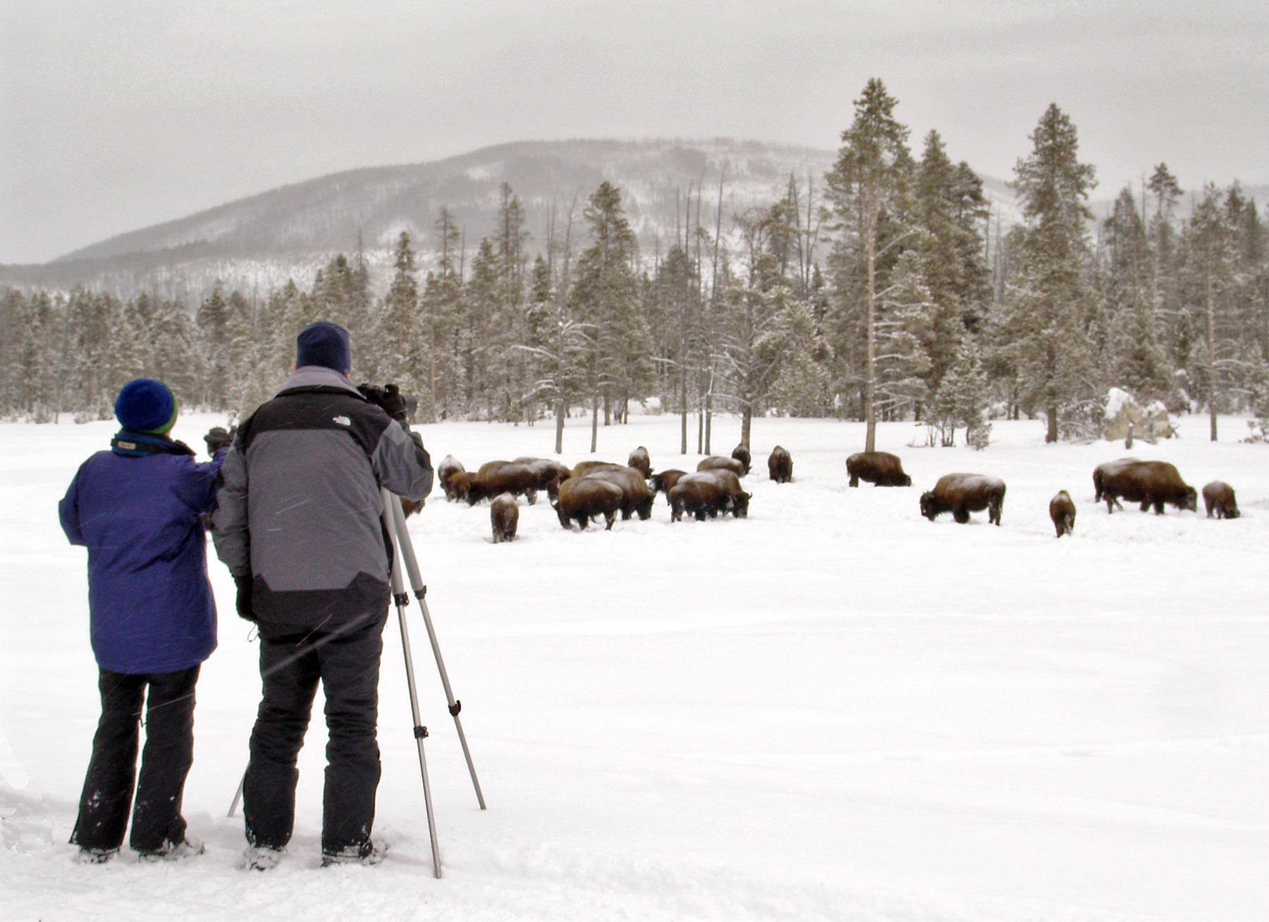 Winter-Yellowstone-Tour-(16)