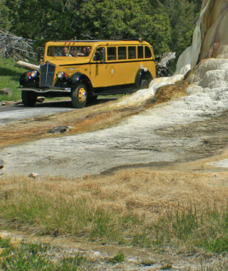 Yellowstone Yellow Bus.