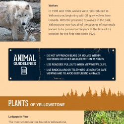 Infographic: Spot These Plants and Animals in Yellowstone National Park!
