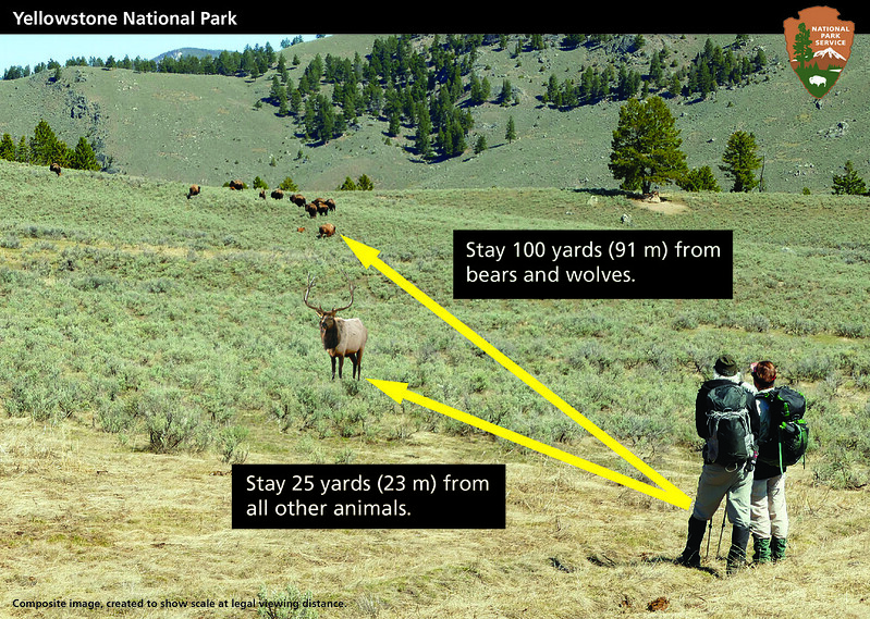 Wildlife_safety_distance_composite