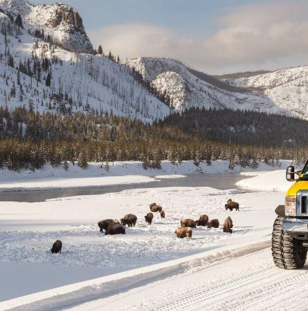 Yellowstone Winter Travel Tips [Infographic]