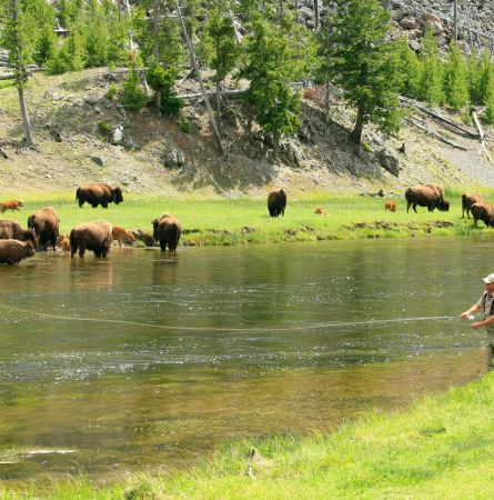 Helping To Protect The Rivers That Run Through Yellowstone
