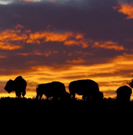 Summer Wildlife Sightings in Yellowstone National Park