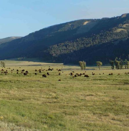 Crazy about Critters: Wildlife Viewing in Yellowstone