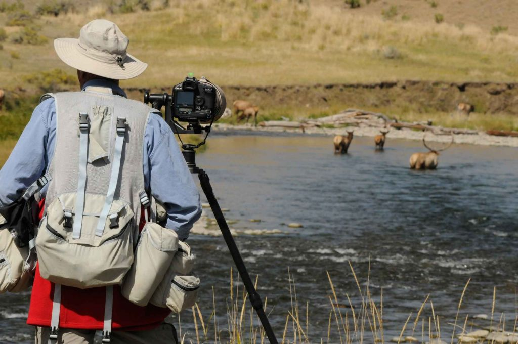 Photographer taking pictures of elk