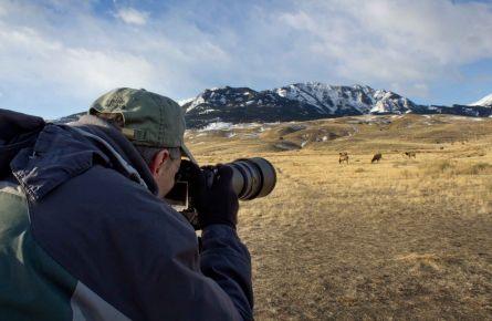 Wildlife photography at yellowstone