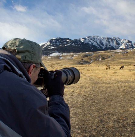 Wildlife Photography in Yellowstone: 11 Pro Tips
