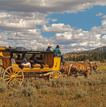 Stagecoaches In Yellowstone