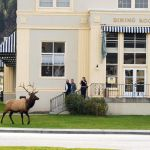 mammoth hot springs hotel & cabins | yellowstone national park lodges
