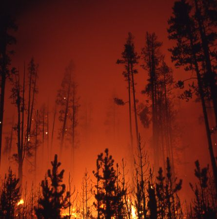 The Value of Fires to Yellowstone National Park