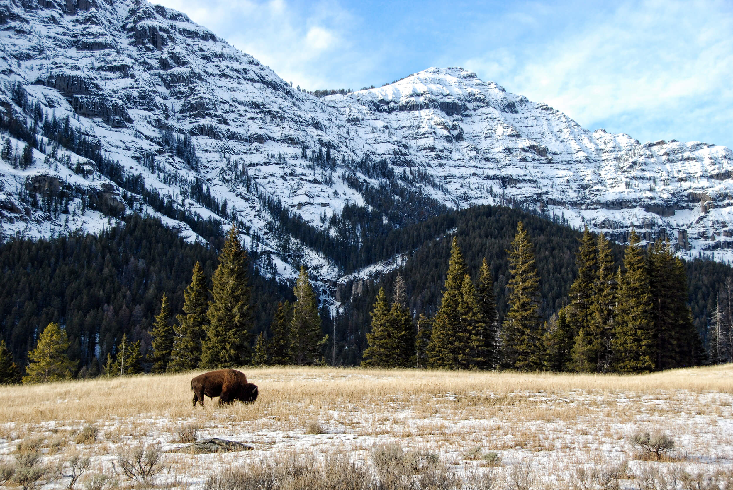 Lamar Valley Wildlife Excursion