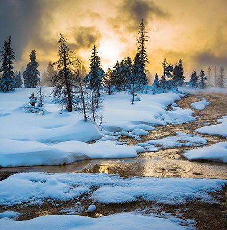 Winter scene at Yellowstone