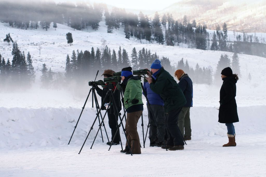 Group in a snowy field watching for wildlife