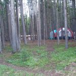 Tents behind trees at Canyon Campground