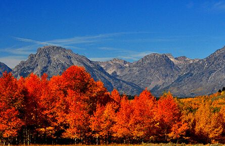 Trees in fall colors with mountains in the background