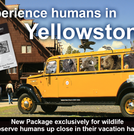 """Announcing our Newest Package: """"Wild About Humans"""""""