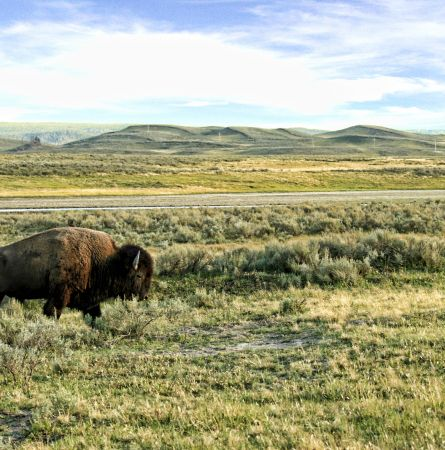 10 Tips for Summer Wildlife Viewing in Yellowstone [Infographic]