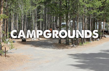 A tree-lined campground.
