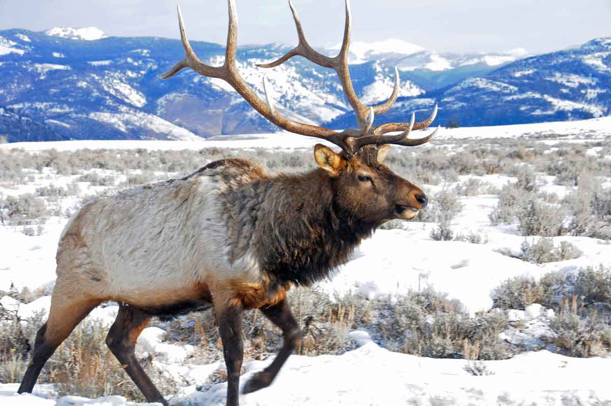 Yellowstone And National Park Tours