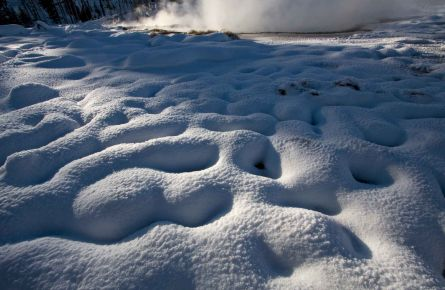 Weird And Wonderful Things To See in Winter