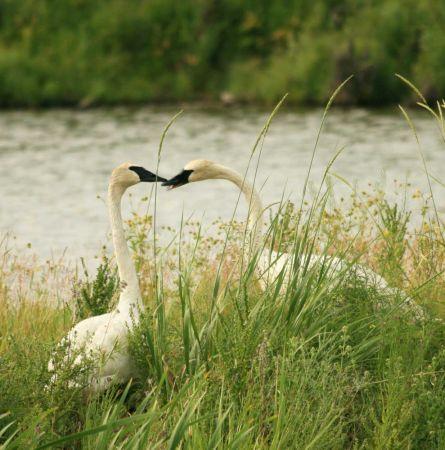 Best Birding in the National Parks