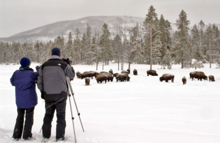 Winter tour watching bison