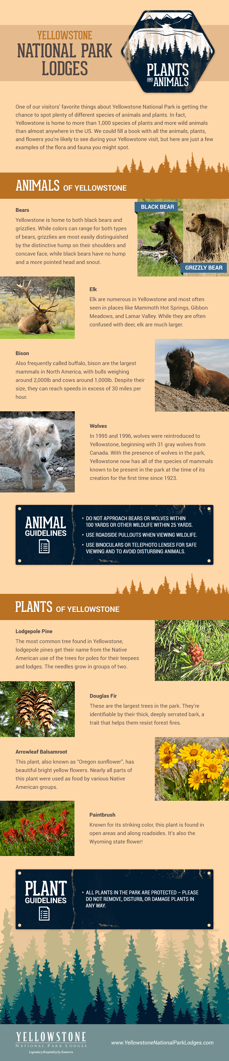 Yellowstone National Park Plants and Animals Infographic