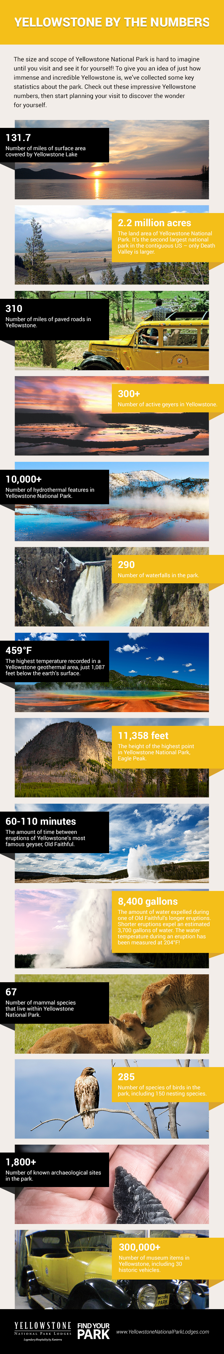 Infographic: Yellowstone Stats