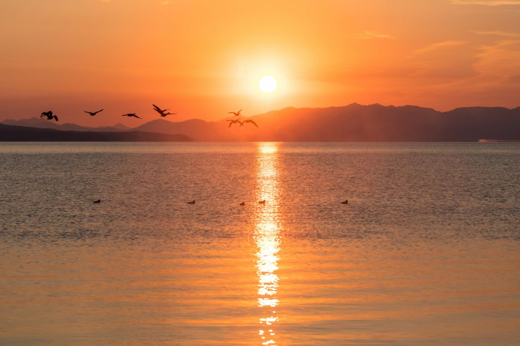A flock of geese fly past a brilliant orange sunrise.