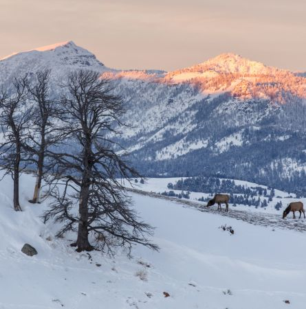 Yellowstone Holiday Gift Guide