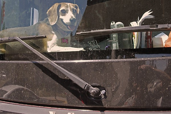 Dog on dashboard in RV at West Entrance Station