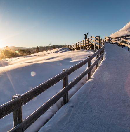 Snow, Steam, Bison, Sky