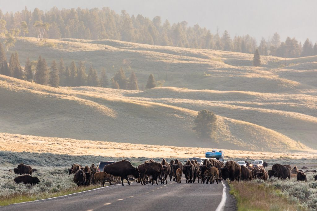Yellowstone Commute