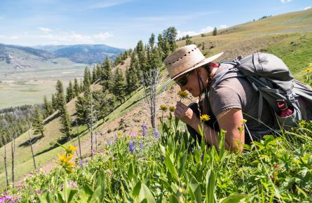 A hiker stops to smell some yellow flowers.