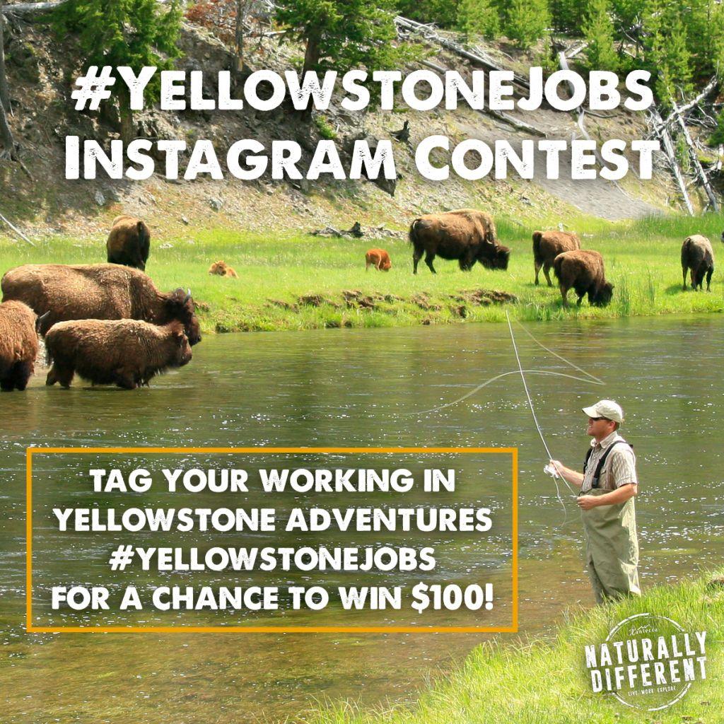 #yellowstonejobs