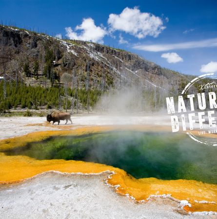 A Naturally Different Employment Experience at Yellowstone National Park
