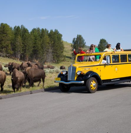 The Coolest Way to Tour Yellowstone