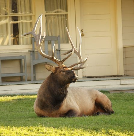 You Know You Live in Yellowstone When…