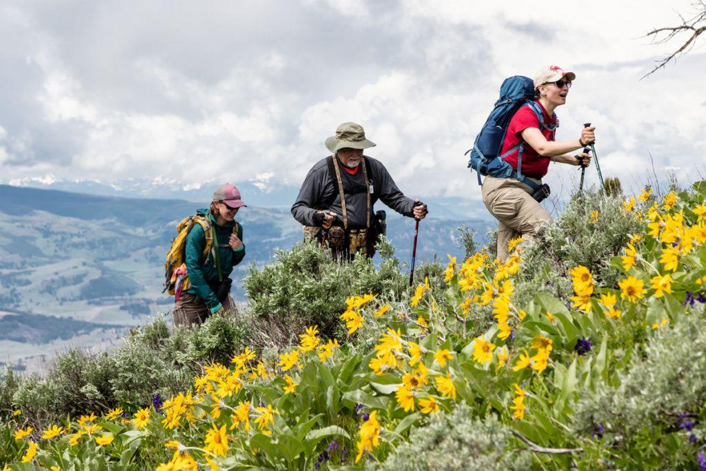 Summer hiking in Lamar Valley (3)