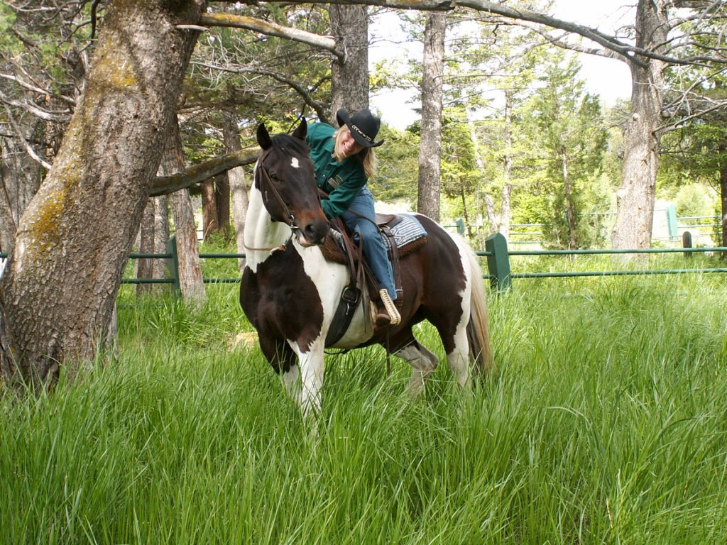 Yellowstone wrangler and horse