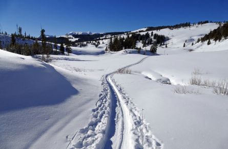 Cross-country skier tracks
