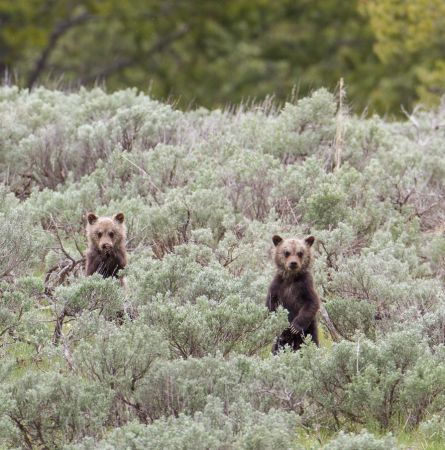 How to Make Your Yellowstone Application Stand Out