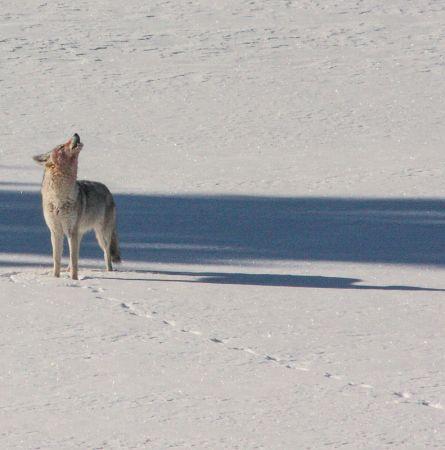 The Northern Range – Yellowstone's Wildlife Hub