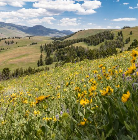 The Ultimate Picnic Spots in Yellowstone